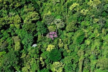 Vendo área de Mata Atlântica em Minas Gerais