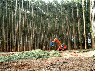 We Buy and Sell Eucalyptus Forests all over Brazil